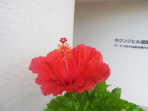 8月9日 撮影.JPG